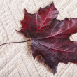 Red Autumn Maple Leaf — Stock Photo