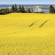 Prince Edward Island Farm Fields — Stock Photo