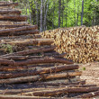 Log Stacks — Stock Photo