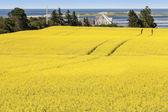 Prins edwardeiland boerderij velden — Stockfoto