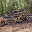Stock Photo: Log Stacks