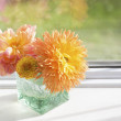 Dahlias — Stock Photo #32579891