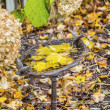 Autumn Birdbath — Stock Photo