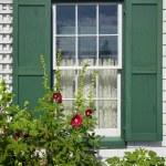 Green Gables Hollyhock — Stock Photo #36726047