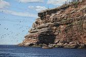Bonaventure eiland — Stockfoto