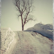 Stock Photo: Winter Poplar