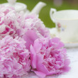 Pink Peonies — Stock Photo #38590263