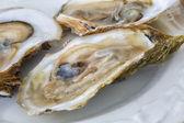 Malpaque Oysters — Stock Photo