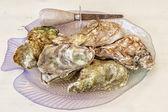 Malpaque Oyster — Stock Photo