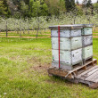 Stock Photo: Orchard Beehives