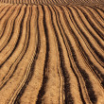 Potato Field — Stock Photo #41962939