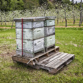 Orchard Beehives — Stock Photo