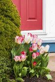Tulip Door — Stock Photo