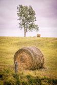 Autumn Hay Bale — ストック写真
