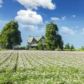 Çiftlik alanı — Stok fotoğraf