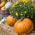 Farm Pumpkins — Stock Photo #49448955