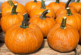 Farm Pumpkins — Stock Photo