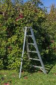 リンゴの果樹園 — ストック写真