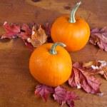 Fall Decorative Pumpkins — Stockfoto #9266382