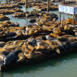Sea lions at Pier 39 — Stock Photo