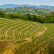 Collio vineyards — Stock Photo