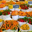 Tulips in Amsterdam - Stock Photo