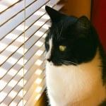 Curious cat — Stock Photo #18578171