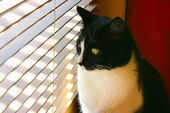 Curious cat — Stock Photo