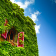 Ivy and window — Stock Photo #18657029
