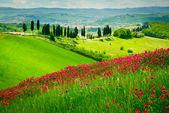 Hügel und zypressen — Stockfoto
