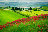 Hill and cypresses — Stockfoto