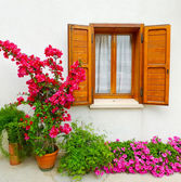 Bouganville and window — Stock Photo
