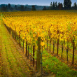 Vineyard in napa Valley — Stockfoto