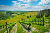 Hills and vineyards — Stock Photo