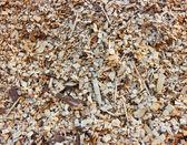 Woodchips — Stock Photo