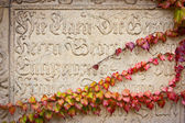 Inscription and Ivy — Stock Photo