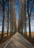Road and trees — Stock Photo