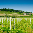 Vineyard Panorama - Stock Photo