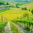 Hills and vineyards — Stockfoto