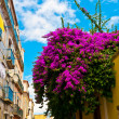Stock Photo: Bouganville in Bairro Alto