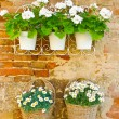 Flowers on a Wall — Stock Photo