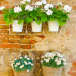 Stock Photo: Flowers on a Wall