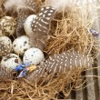 Bird nest — Stock Photo #21830397