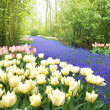 Keukenhof Garden - Stock fotografie