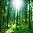 Sun light in the forest - Stock Photo