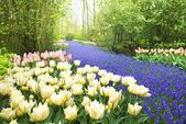 Keukenhof Garden — Stock Photo