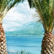 Palm tree — Stock Photo #48505193