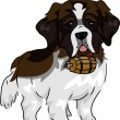 Stock Photo: St. Bernard