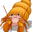 Hermit Crab - Stock Photo