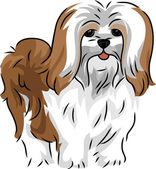 Lhasa Apso — Stock Photo